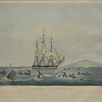 "image of ""South Sea Whale Fishery"" Aquatint Engraving"
