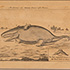 image: engraving_sperma-cete_whale