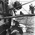 cutting_in_right_whale_1 - 1947_1596_20