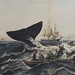 Menu image for The Rise and Fall of the American Whaling Empire