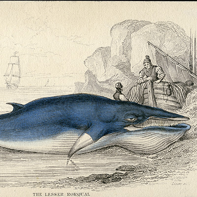image: Whales & Other Marine Mammals